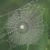 Shoqëria ateiste është e ngjashme me shtëpinë e merimangës