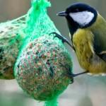 Mitmachaktion «Stunde der Wintervögel»